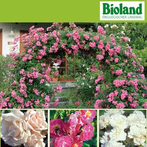waschb r garten tipps pflege von bio rosen. Black Bedroom Furniture Sets. Home Design Ideas