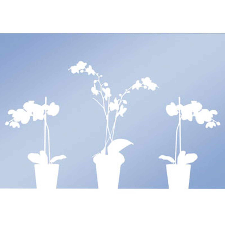 fenster sichtschutz folie orchidee. Black Bedroom Furniture Sets. Home Design Ideas